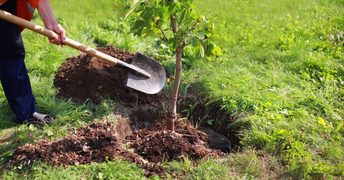 arbre-jardin-plantation